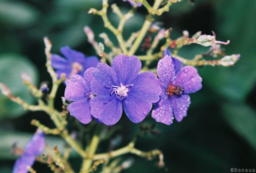 Pourquoi un voyage autour du monde - Fleurs de Guyane française