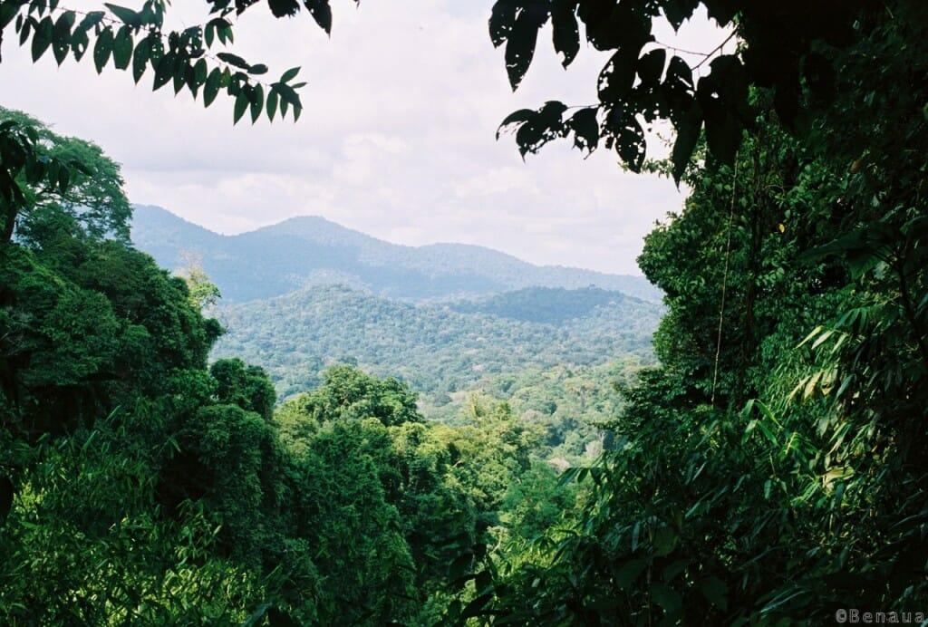 Pourquoi ce voyage autour du monde ? Paysage de Guyane française