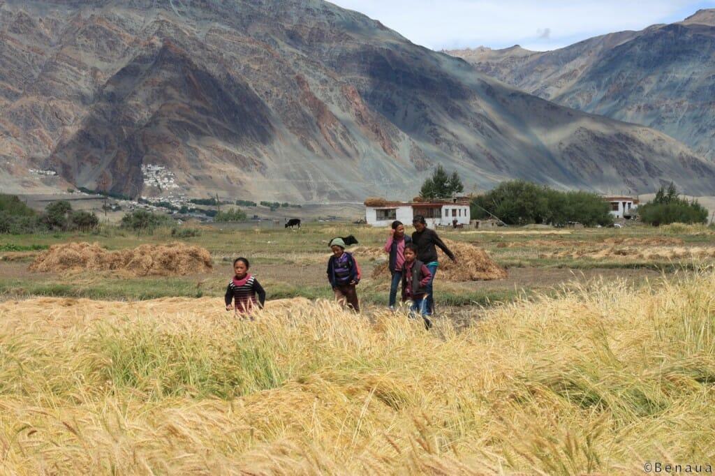Enfants marchant dans les champs au Zanskar