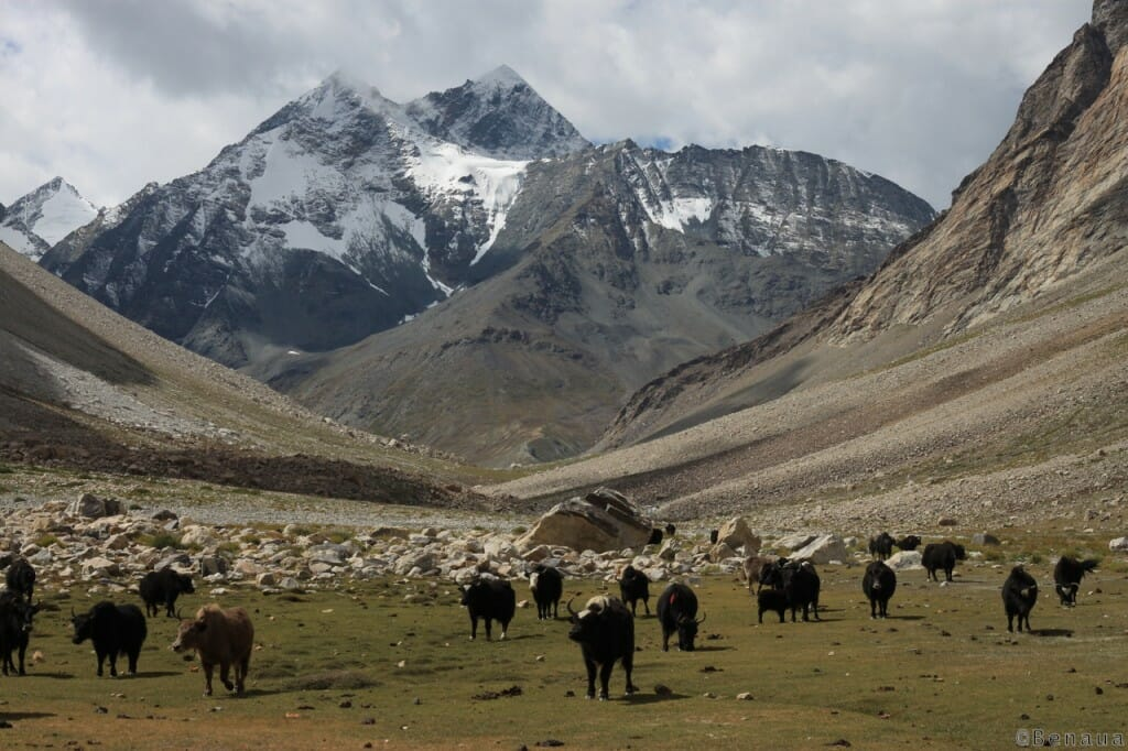 Trek au Zanskar en Himalaya - Paysage - Benoit Richer