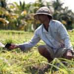 Quoi faire pendant 15 jours à Bali en Indonésie ? Itinéraire, Infos