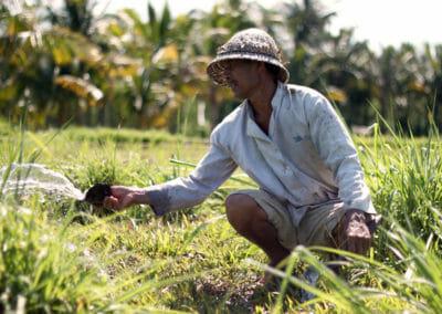 Bali en Indonésie - Paysan Balinais