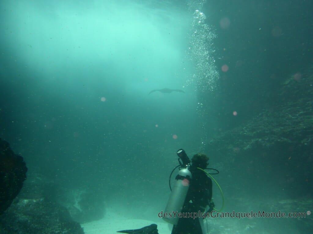 Apprendre la plongee à Bali - Plongeur et Raie Manta