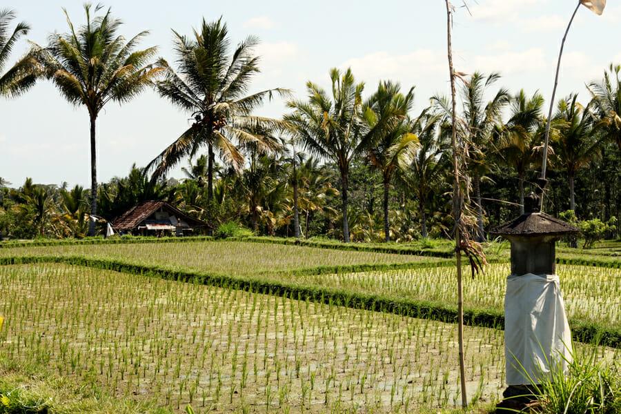 Balade dans les rizières _ 15 jours à Bali en Indonésie