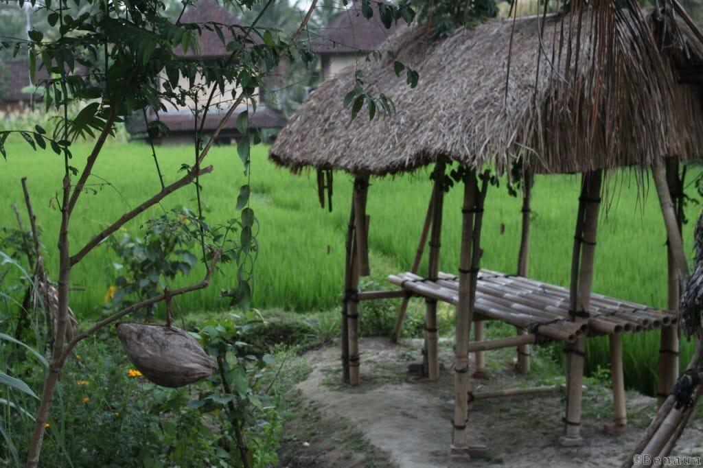 Bali en Indonésie - Riziere à côté de Ubud