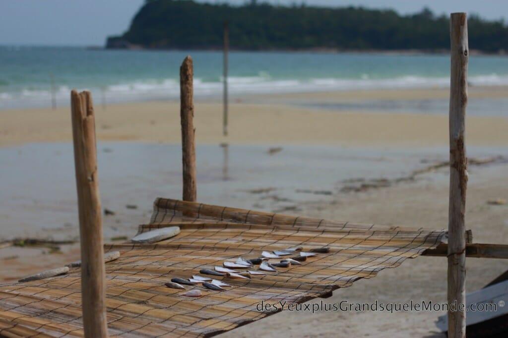 Poissons séchés sur la plage de Quan Lan