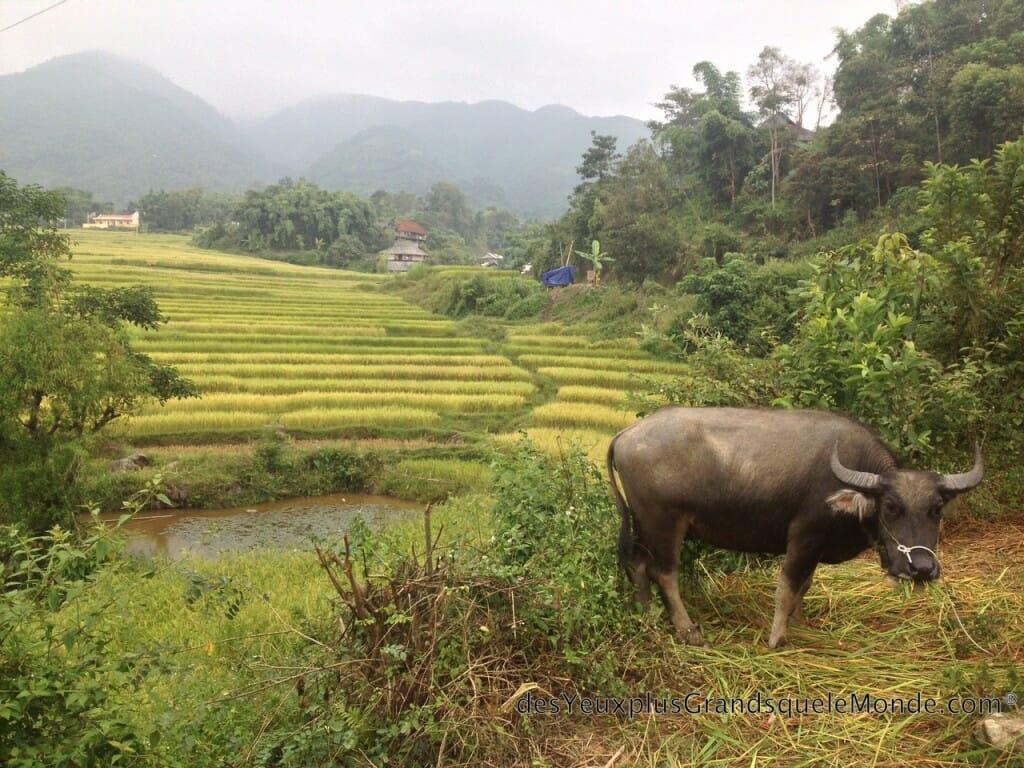 Vietnam en moto - De Son La à Sapa