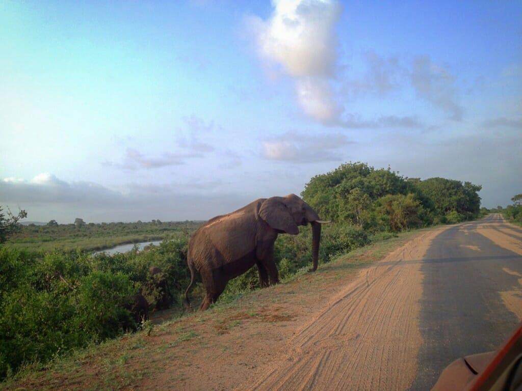Eléphant dans le Parc Kruger en Afrique du Sud