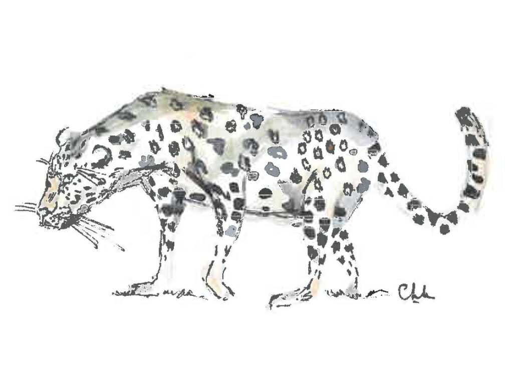 Dessin du léopard du Parc Kruger en Afrique du Sud