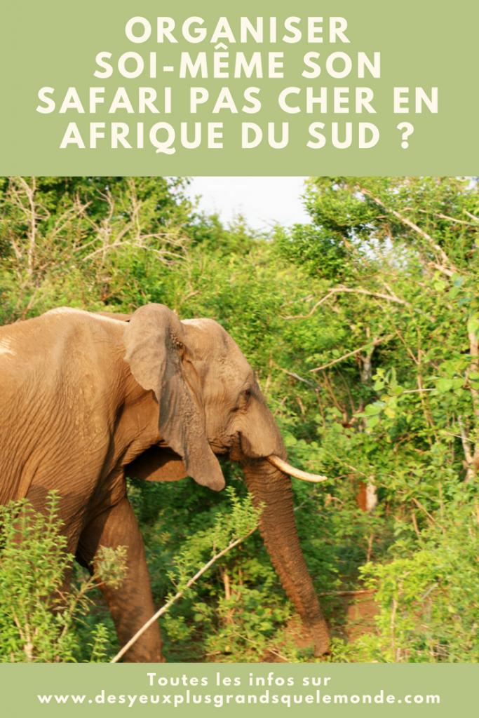 Comment organiser son safari pas cher en Afrique du Sud ?