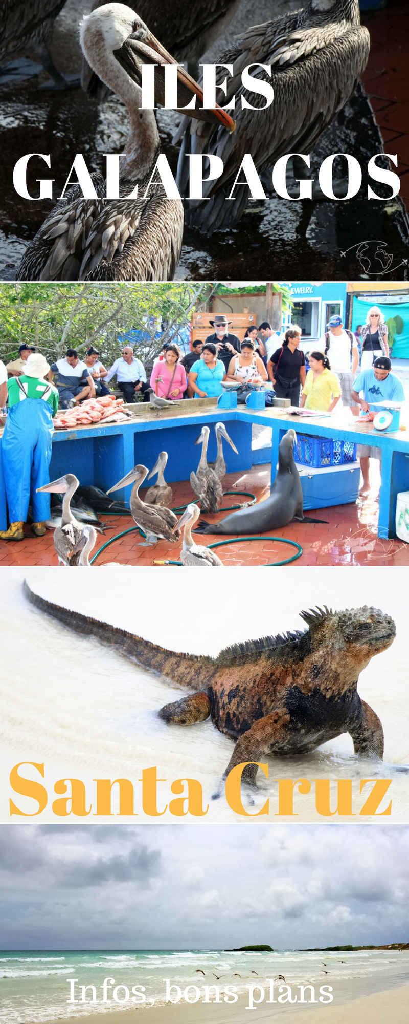 Visiter les Iles Galapagos - A la découverte de l\'île Santa Cruz