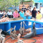 Visiter les Iles Galapagos - A la découverte de l'île Santa Cruz