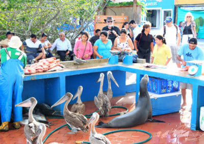 Marché de l'île Santa Cruz - Iles Galapagos