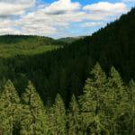 Que faire à Corcieux dans les Vosges : Nature, Visites et Randonnée