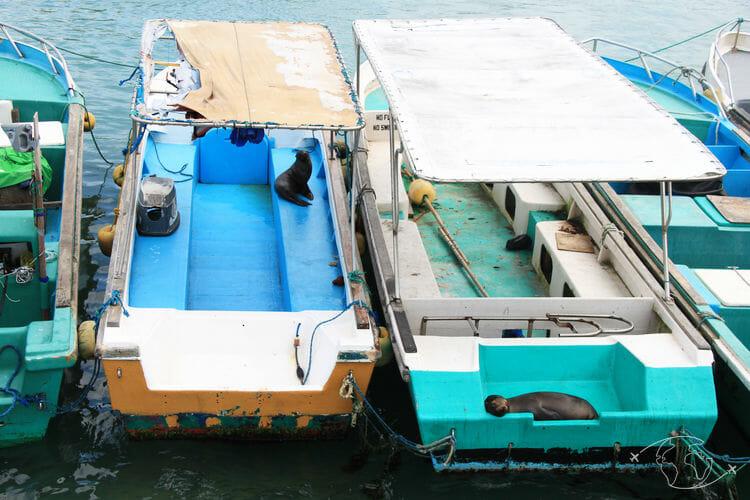Visiter les Galapagos - Otaries dans les bateaux - île Isabela