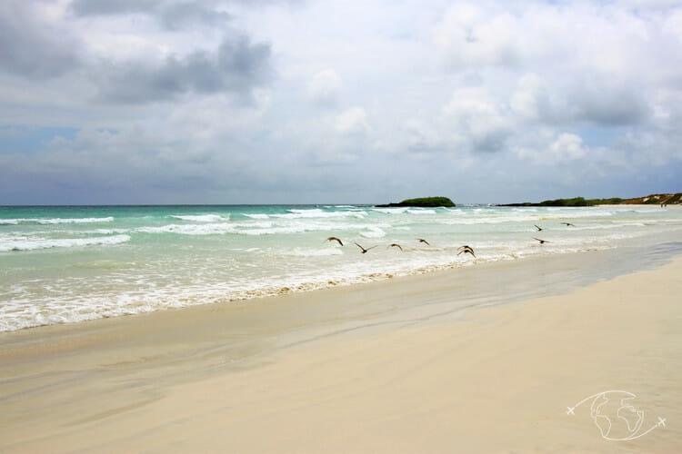 Plage de Tortuga Bay - Ile Santa Cruz