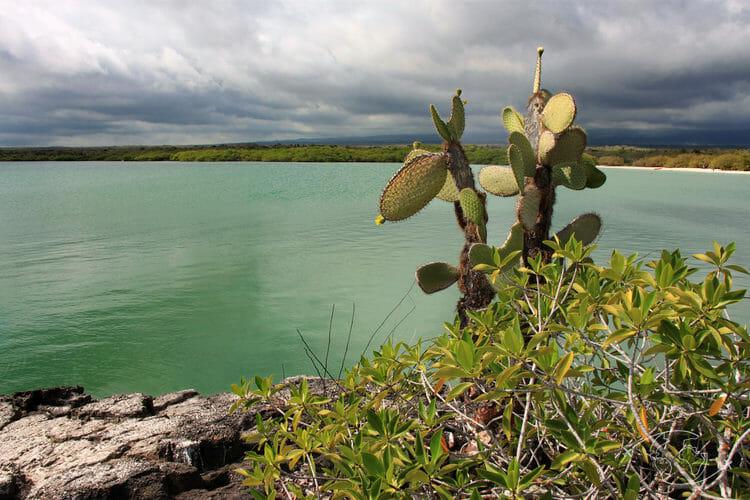 Iles Galapagos - Tortuga Bay - Ile Santa Cruz