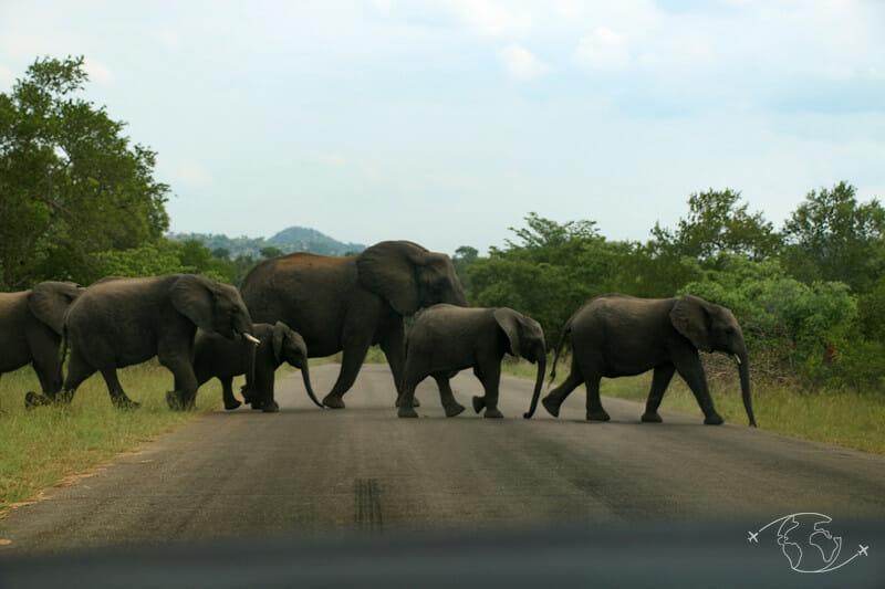 En voiture dans le Kruger - Afrique du Sud