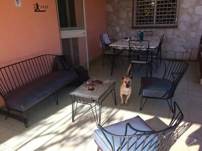 Plongée à Cuba - Capitan le chien de la maison