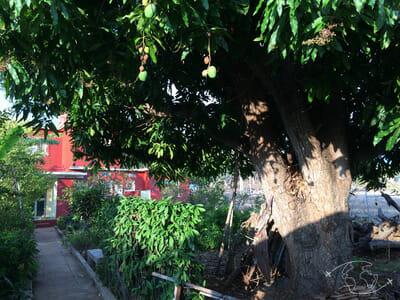 Plongée à Cuba - Dans le jardin de la maison de José et Oliva