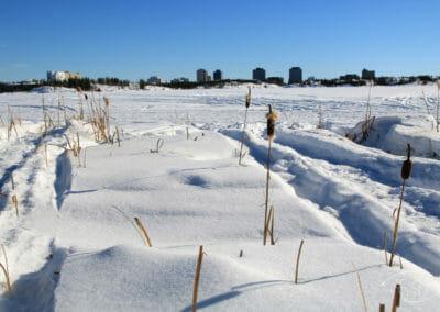 Aventure dans le Grand Nord - Roseaux sous la neige