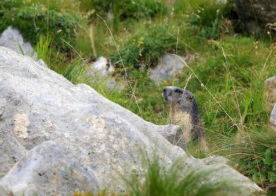 Tour des Dents Blanches - Marmotte
