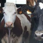 Visite de ferme en Lozère : la fromagerie de Nadège et Olivier