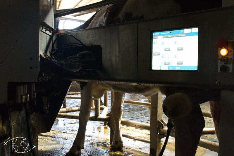 Visite de ferme en Lozère - Machine a traire automatique - Ferme Ressouche