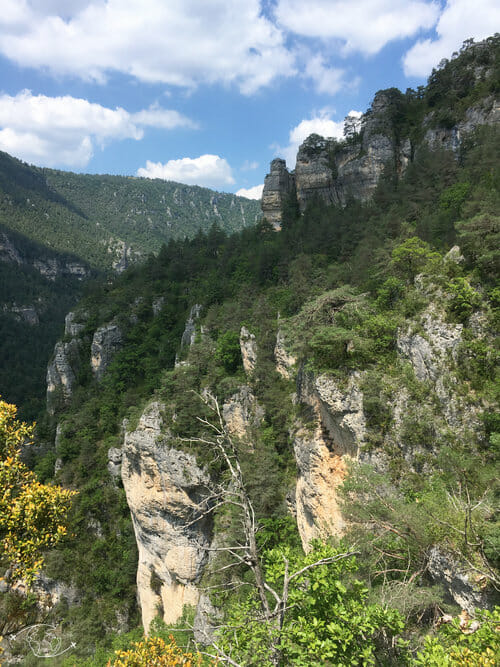 Falaises abruptes du sentier des Gorges du Tarn
