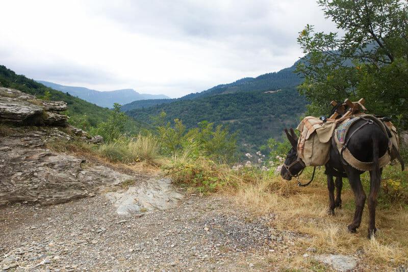 Pablo sur les hauteurs de Florac - Randonnée avec un Ane