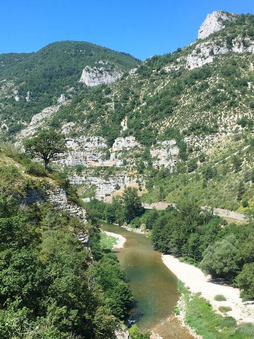 Un arbre sur les Gorges du Tarn