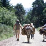 Chemin de Stevenson : randonnée itinérante sur le GR70 en Lozère