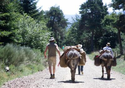 Chemin de Stevenson - Voyager avec un âne