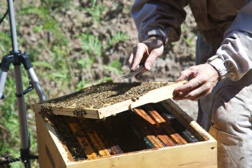Démonstration d'ouverture de ruche - L'Arc-en-Miel - St Affrique