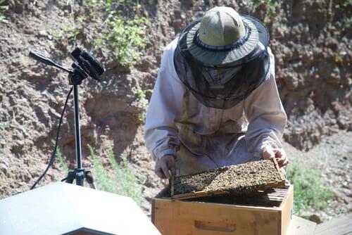 Installation pour la retransmission de l'ouverture de ruche - L'Arc-en-Miel - St Affrique