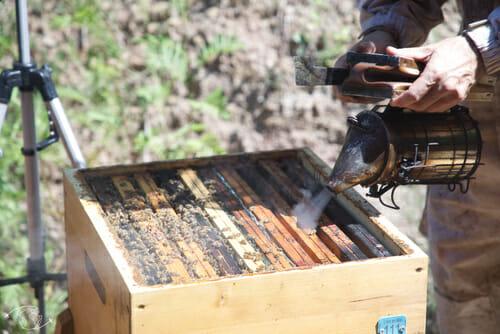 Ouverture d'une ruche en direct - L'Arc-en-Miel - St Affrique