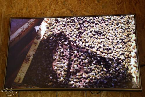 Retransmission de l'ouverture de ruche - L'Arc-en-Miel - Ste Affrique