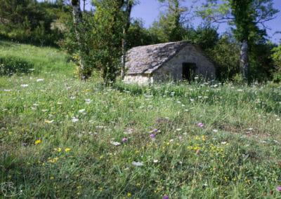 Randonnée Larzac - Ancienne cabane de berger
