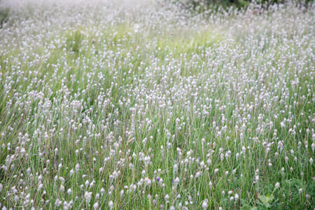 Randonnée Larzac - champ de fleurs du Larzac 1