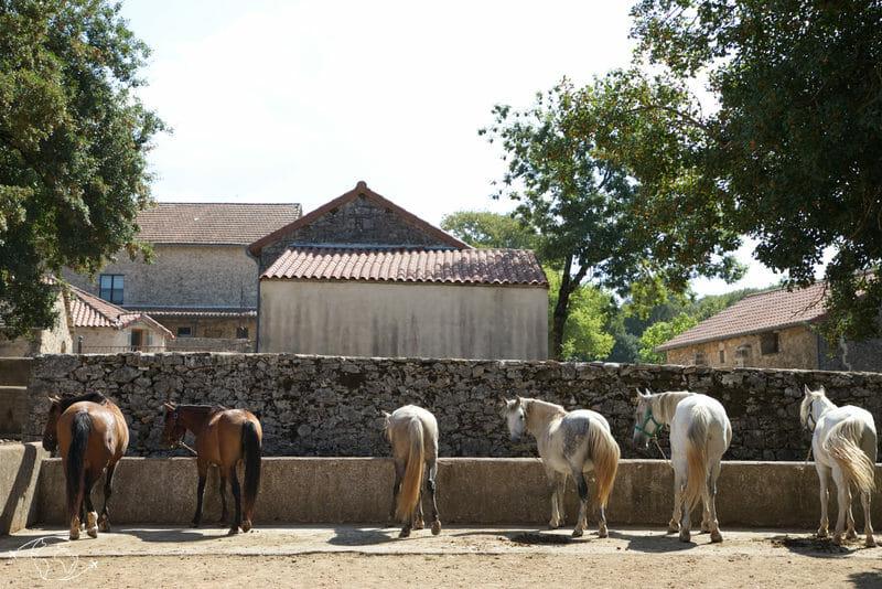Randonnée Larzac - Le Domaine de Gaillac