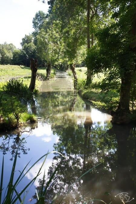 Dans les conches du Marais Poitevin