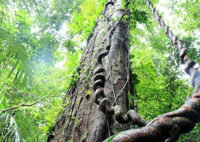 Dans la forêt à Palenque