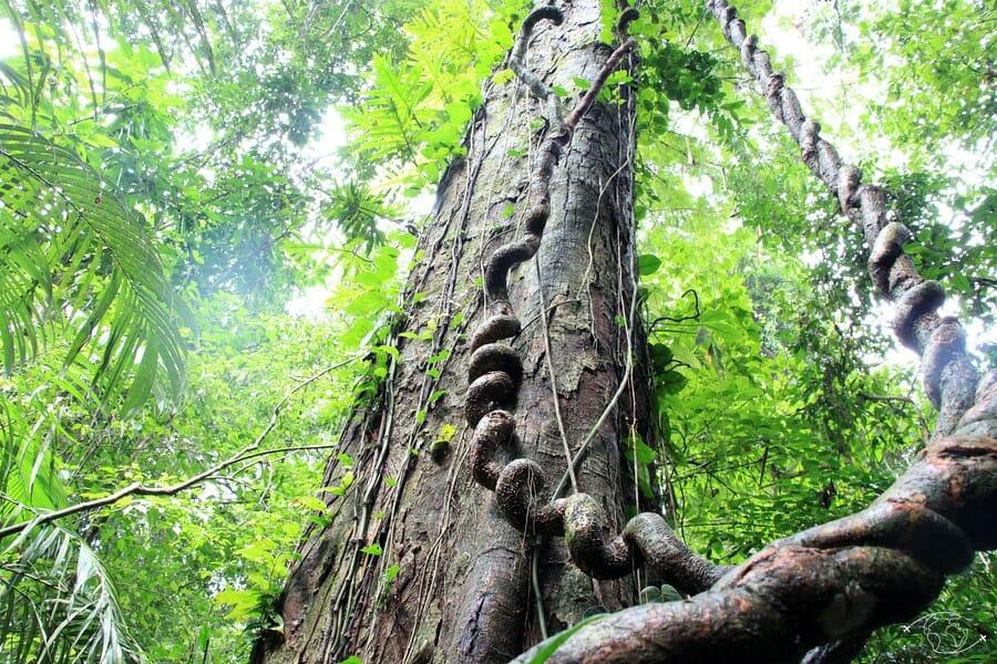 Dans la forêt de Palenque