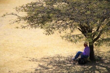 Mexicain à l'ombre d'un arbre