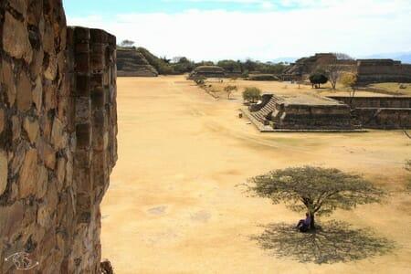 Site de Oaxaca - Mexicain sous l'arbre