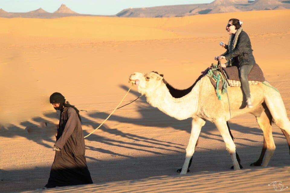 Tour de chameau dans le désert du Sahara