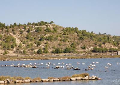 Visiter Narbonne - Flamand rose de l'étang de Peyriac-de-Mer