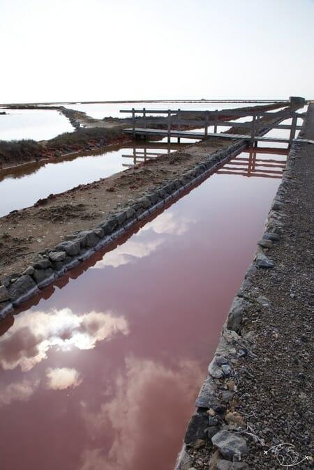 Visiter Narbonne - Salins de Gruissan - Reflets rosés dans les canaux