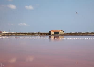 Visiter Narbonne - Salins de Gruissan - Le marais rose