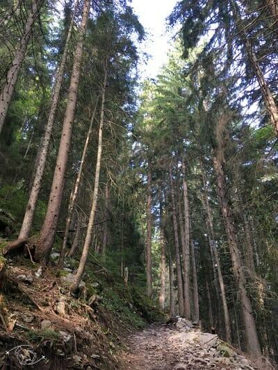 Dans les bois au dessus de Grand Paradis - Champéry